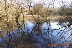 Overflow Pond in Winter