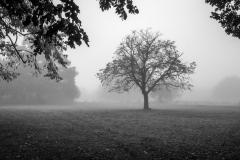 Chislehurst Commons Grasslands Winter
