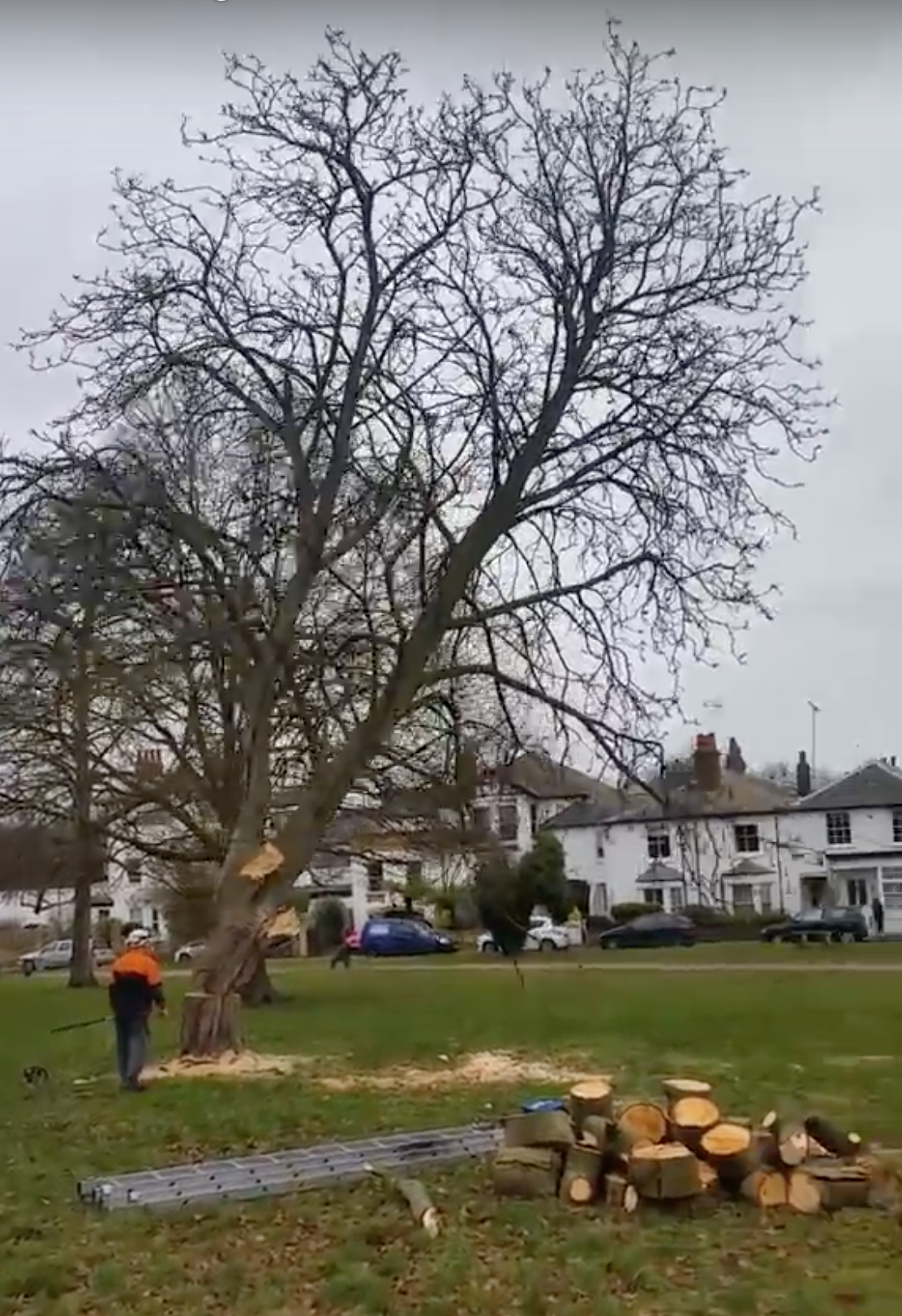 Caught on camera: pupils cheer as tree is felled